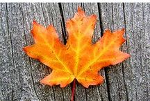 Fall Learning / All sorts of wonderful learning ideas for autumn!