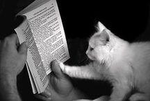 ne kitapsız ne kedisiz...
