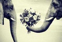 elephants / by McKenna McClure