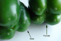 MBG-Food-Natural