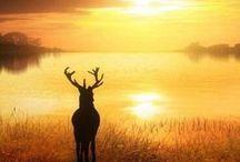 follow the sun / Sun=heart Follow the sun