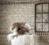Van Buren ✽ Schapenvachten / Traditioneel ons specialisme! Volg dit bord voor het zien van onze hoge kwaliteit schapenvachten & inspiratie voor in je interieur!