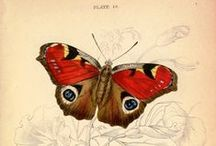 ♥ Butterflies