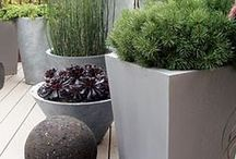 planted pots and other containers