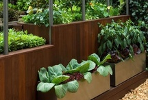 raised beds and edible gardens