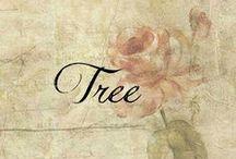 ಌ Christmas*:•.Tree / ಌ  christmas tree.•:*  / by ಌBeckyಌ