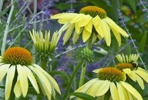 Plant Palette-Perennials / includes ground covers