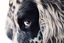 Beautiful creatures / The animal kingdom