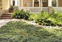 lawn alternatives / Consider these lawn alternatives for the Georgia piedmont. Hate mowing? Too much shade? Don't like applying a lot of chemicals?