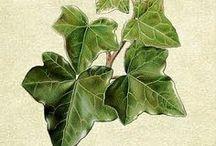 HERBÁŘ  / Rostliny všemožných druhů, které se u nás dají najít.