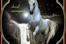 cheval / image