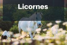 LICORNES ❧ Goodies, Mugs, Papeterie et objets mignons en rapport avec les licornes ! / Tu le sais, nous vouons un véritable culte  à la Licorne ! D'ailleurs, n'oublie pas de t'abonner à notre Licorne Letter pour recevoir un cadeau gratuit  https://zonemagique.fr/newsletter   |  Licornes, licorne, unicorn, unicorns, goodies, objets, mignon, cute, partage, wishlist, mugs, books, livres, pictures, photos, illustrations, animal, peluche licorne, chausson licorne, la licorne, jeux de licorne, deco licorne, combinaison licorne, jeux licorne, licorne peluche, je suis une licorne.