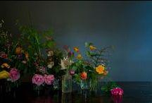 | Hable - Colorset 3 | / a color conversation between rinne allen, photographer and susan hable, designer. colorset3.com tells our story! enjoy