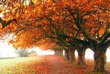 "A u t u m n / Autumn... ""The year's last loveliest smile"" ~ William Cullen Bryant / by Hazel Eades"