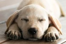 Doggies! / by Lori Schultz