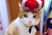 Here kitty kitty cat / by MayLing Stone