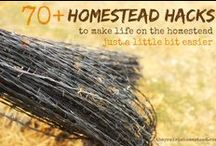 On the Homestead / by Melissa D