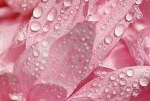 Pink / by Christine McClintock Hudspeth