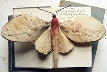 butterfly / farfalle
