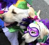 Tybee Mardi Gras Parade & Street Party