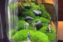 terrariums & plants