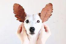 Fotografia   Cachorros / As melhores fotos de cachorros. Algumas são minhas, da nossa golden retriever Pipoca, e outras são inspirações.
