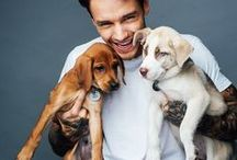 » ChamPayne « / A Collection of a man who is just as sweet as ChamPayne... Liam James Payne