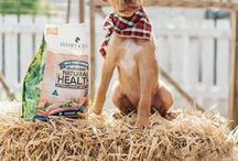 Healthy Dog Food and  Supplements / We are a grain free and healthy dog food supplier in Australia. With several brands and types of cat food.