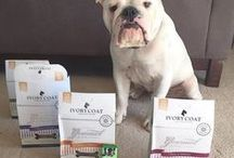 Ivory Coat Australian Made Dog and Cat food / Developed with veterinarians and animal nutritionists Australian Natural Health™ is the finest food for your growing companion's balanced nutrition and every day feeding.