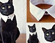 DIY Clothing and Stuff for your Pet!