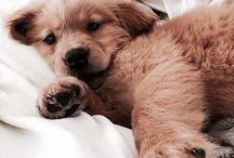 Cute dogs / For puppy lovers