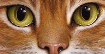 Coração felino / Miauss e  ron-rons