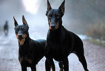 dogs i want!!!!