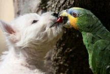 Animals / My love for animals, especially #parrots and #dogs