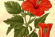 Flora & Fauna Ilustration