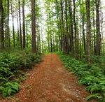 Trail Running / trail running, running in the wilderness, exercise outdoors, nature running, outdoor adventure, running trails, off-road running