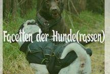 Hunde - viele verschiedene Rassen , Charaktere und unterschiedliches Aussehen / Hunde können so unterschiedlich sein und auch wieder so viel gemeinsam haben. Diese Pinnwand soll diese Gemeinsamkeiten und Unterschiede zeigen. Hund / Rassen / Hunderassen / Shar Pei / Labrador / Retriever / Setter / Bulldogge / Mischling / Dackel / Dogge / Dalmatiner / Akita / Shiba / Schäferhund / Bernhardiner / Sennenhund / Windhund / Pitbull /...