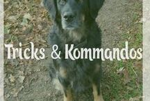 Tricks & Kommandos - für den einfacheren Alltag , Auslastung oder kreative Zwecke - Hund & Katze / Kommandos erleichtern den Alltag und somit das Leben mit Tier . Tricks können für Auslastung sorgen und für kreative Ideen genutzt werden. Hier findest Du Anleitungen, wie du deinem Tier Tricks & Kommandos beibringen kannst. Katze / Kater / Hund / Rüde / Hündin / Tricks / Kommandos / Training / Fotografie / Auslastung / Männchen / Sitz / Platz / Fuß / Schnüffeln / Guck /...