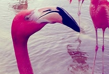 Flamingo Love / by Mariana Rausch