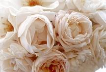 Glorianna's Bouquet