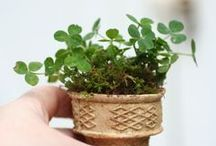 Plant a little Love and More / by Il Mare Atelier