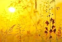 "Hello Sunshine / ""O`, Sunlight! The most precious gold to be found on Earth.""  ~Roman Payne"