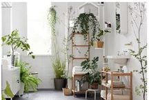 Indoor Gardening / Beautiful greenery to grow indoors!