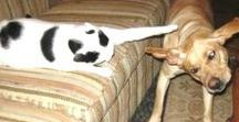 Cats VS Dogs - Funny Videos