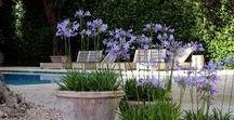 GARDEN / Moje inspiracje ogrodowe, urządzenie ogrodu, rośliny i warzywa.