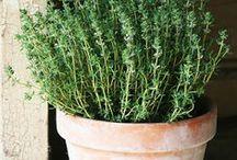 Garden,Herbs & Essential oils / Gardening for the soul { Jardin d'Éden } Free Spirit Garden ,