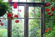 She Dreams - Gardens & Yards