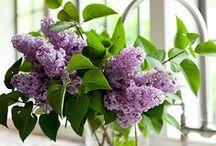full bloom / by Rachel Ann Stuart
