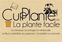 CupPlante, la plante facile.