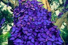 boboleta / muitas borboletas iram voar pela sua tela quando vir  as lindas fotos de borboletas ...!!!!!!!!!!!!!!!!!!!!!!!!!!!!!!!!!!!!!!!! quem gosta de borboleta poem que experimentou e poe que amei!!!!!!!!!!!!!!!!!!!!!!!!!!!!!!!!!!!!!!!!!!!!!!!!!!!!!!!!!!!!!!!!!!!!!!!!!!!!!!!!